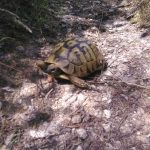 A turtle walks to Melnik