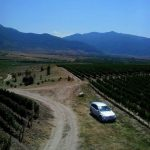 Wine fields in village Ustina