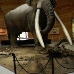 The Mastodon in the Pliocene park